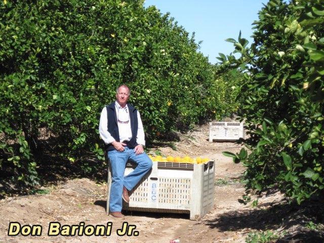 Don Barioni Jr. and his lemon farm
